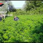 Droga: armi e marijuana per mezzo mln, sequestro nel Reggino