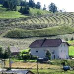 Regione: Agricoltura, pubblicato bando Por