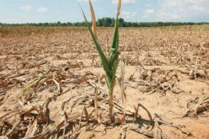 Agricoltura: Confagricoltura, Regione convochi tavolo tecnico
