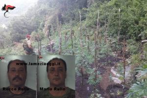 Droga: irrigavano piantagione di cannabis, arrestati due fratelli