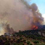 Incendi: numerosi roghi nel Cosentino, al lavoro anche cittadini