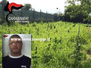 Droga: irrigava piantagione canapa indiana, 1 arresto nel Reggino