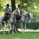 Rossano: controlli straordinari Carabinieri tutela patrimonio boschivo
