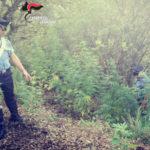 Lamezia: irriga piantagione, 55enne arrestato dai Carabinieri