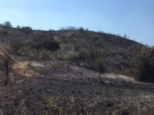 Incendi: la Fidelitas si mobilita in favore dei cittadini