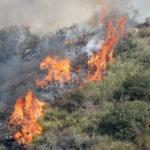 Incendi: in fiamme ettari di bosco in zona montana del Crotonese