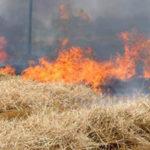 Incendi: fuoco sterpaglie danneggia vetture nel Cosentino