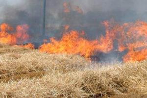 Appicca fuoco 49enne di Grotteria arrestato dai carabinieri