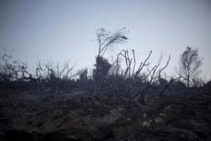 Incendi: tenta di spegnere fiamme, muore nel Cosentino