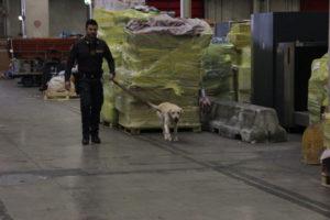 """Gdf: conclusa operazione """"Perseo"""", sequestrati 205 chili di droga"""