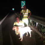Animali: labrador salvato da cantonieri Anas, ora in canile Vibo
