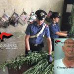 Droga: coltivava canapa indiana in serra, arrestato