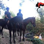 Droga: coltivava cannabis, un arresto S. Eufemia D'Aspromonte
