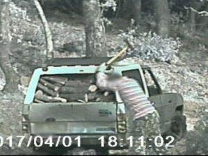 Rossano: furto di legna, eseguite due misure cautelari