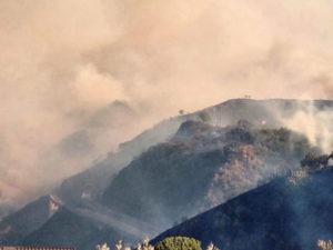 Incendi: fiamme nel Cosentino, morti animali intrappolati in rogo