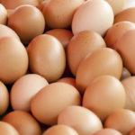Uova al fipronil: Coldiretti, bene controlli, no allarmismi