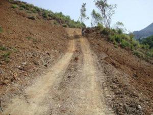 Area boschiva tagliata abusivamente, una denuncia nel Cosentino