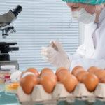 Uova al Fipronil scoperte dal servizio veterinario Asp Lamezia Terme