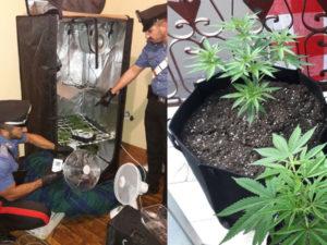 Droga: una persona denunciata per spaccio dai Carabinieri