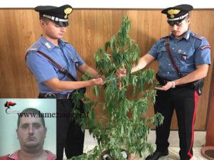 Droga: trovato con pianta cannabis arrestato a Palmi