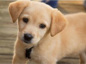 Comune Crotone: adotta un cane, al via campagna sensibilizzazione