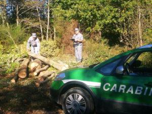 Rubava piante da bosco comunale, 62enne denunciato nel Cosentino