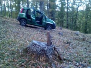 Giovane ladro di legname arrestato a Rossano