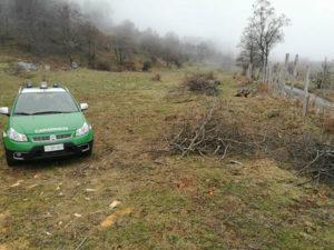 Furto alberi su terreno demaniale, 3 indagati nel Cosentino