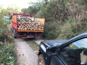 Furto di legname, tre persone denuciate nel Cosentino