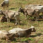 Vacche sacre: Cosentino, risultati frutto strategia vincente