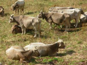 """Sindaci contro le 'vacche sacre', """"situazione insostenibile"""""""
