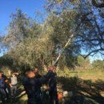 Danneggiato ecocompattatore a Rossano, indagini