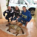 Carcassa di un giovane lupo appenninico su una strada in Sila