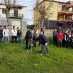Ambiente: a Crosia un ulivo davanti ad ogni scuola