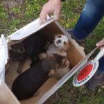 Cosenza: agenti nucleo Decoro Urbano salvano cuccioli cane