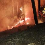Incendi: ancora fiamme nella pineta di Siano a Catanzaro