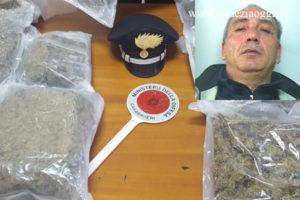 Droga: marijuana tra i mandarini, un arresto a Rosarno