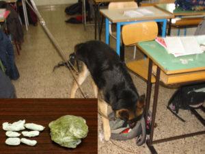 Droga: marijuana nel bagno di una scuola a Vibo Valentia