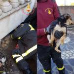 Cucciolo di cane salvato da Vigili del Fuoco a Catanzaro