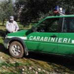 Controlli in azienda zootecnica a Torano Castello, una denuncia