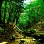 Parchi: Tallini, Calabria ha patrimonio verde inestimabile