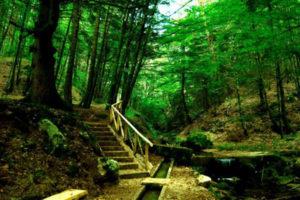 Parco Serre: Tallini, le linee-guida sono carenti