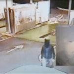 Tentata rapina mascherato da topo, un arresto nel Cosentino