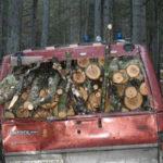 Furto Legna Parco della Sila, 2 arresti dei Carabinieri Forestali