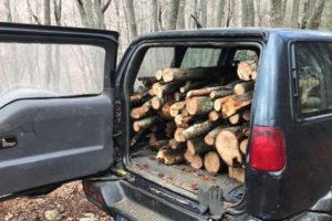 Furto di legna nel Cosentino, condanna e multa