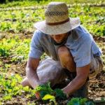 Agricoltura: Cisl e Uil, Regione intervenga per la Sibaritide