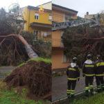 Lamezia: albero cade su strada, paura ma nessun ferito