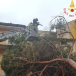 Lamezia: Ruberto(Fi), albero caduto su strada per incuria