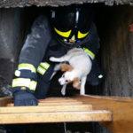 Cucciolo cane salvato dai Vigili del Fuoco nel catanzarese