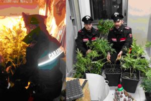 Droga: serra marijuana in casa, arrestato 30enne a Paola